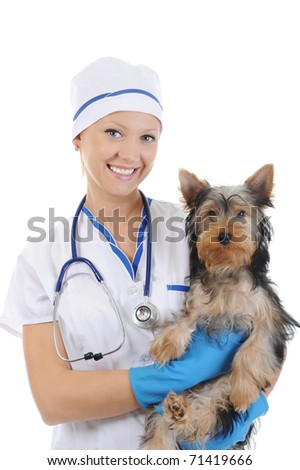 Veterinary with a dog for a review. isolated on white background - stock photo