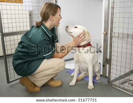 Vetinary Nurse Checking Sick Animals In Pens - stock photo