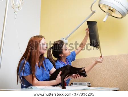 Vets nurses examining a cat's x-ray - stock photo
