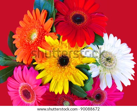 Vibrant and colorful background of flowers