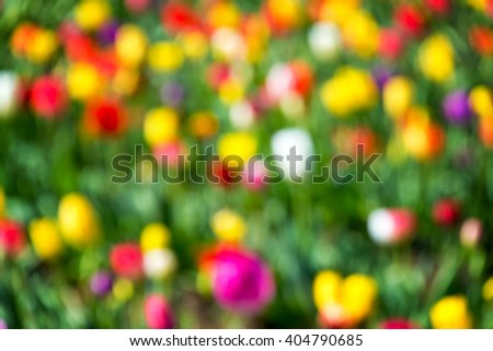 Vibrant and colorful out of focus background of tulips - stock photo