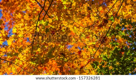 Vibrant autumn foliage in the forest
