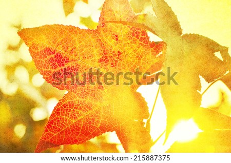 Vibrant autumn leaves and rays of sunshine, autumn scene on paper textured background - stock photo