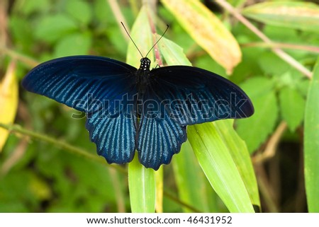 Vibrant blue butterfly - stock photo