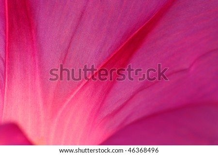 Vibrant close up of a pink flower petal - stock photo