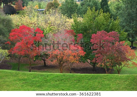 vibrant colors of autumn in the Australian park