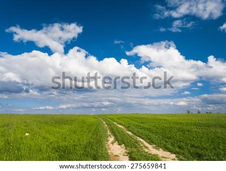 Vibrant Colors Through the Green  - stock photo