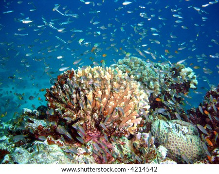 Vibrant coral reef,tropical dive site - stock photo