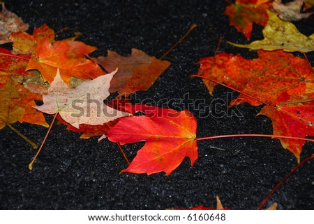 Vibrant fall foliage on a bright overcast day fallen leaves - stock photo