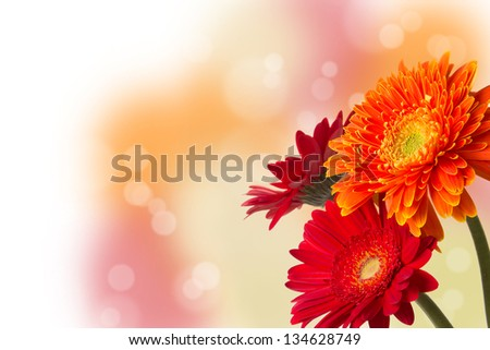 Vibrant floral template with three colourful Gerbera daisies in red and orange with a bokeh background and copyspace for your text or message
