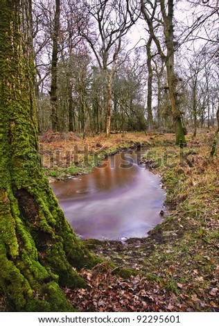 Vibrant forest scene Winter Autumn Fall colors with stream flowing through centre - stock photo
