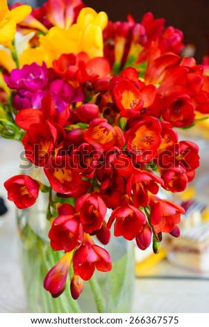 Vibrant Freesia flowers - stock photo