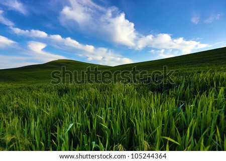 Vibrant green fields and hills covered with fresh alfalfa under a bright blue sky with puffy white clouds.