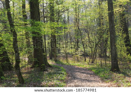 Vibrant green foliage in a forest in spring