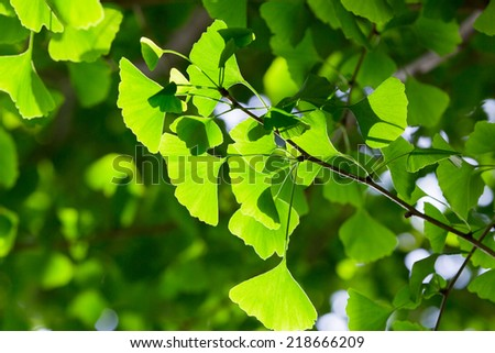 Vibrant green leaf background, shallow focus