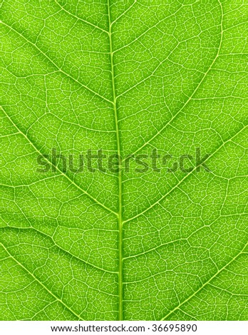 Vibrant green leaf macro close up natural background. - stock photo