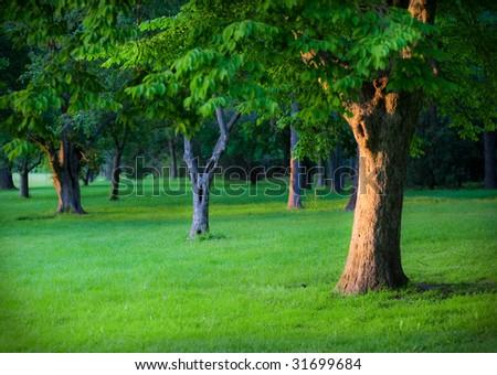 Vibrant green park setting with tree basking in golden sunlight. - stock photo