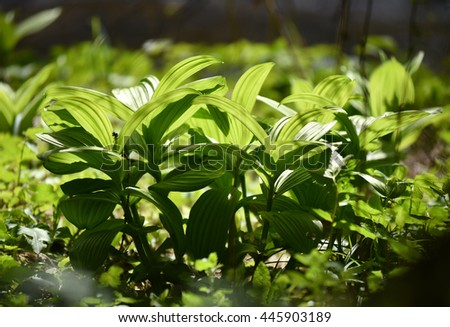 Vibrant green plant leaves in the forest - stock photo