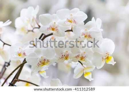Vibrant holiday background with beautiful close up white orchid flower branch  - stock photo