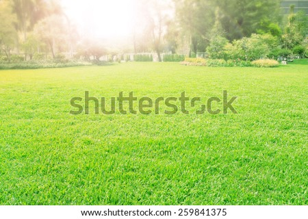 vibrant of playground,meadow ,green grass field  - stock photo