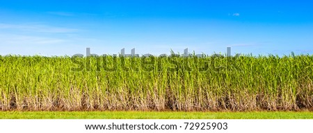 Vibrant panorama of sugar cane plantation in Queensland, Australia - stock photo
