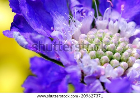 Vibrant Purple, Fuzzy Flower Against Beautiful Yellow Background - stock photo