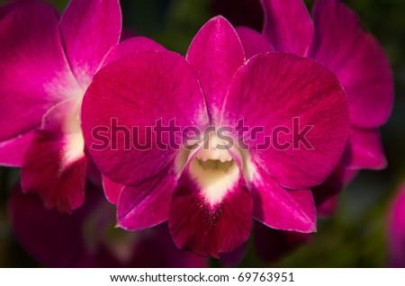 malai thai massage blue lotus massage