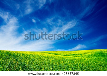 Vibrant rapefield and blue sky. - stock photo
