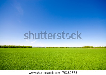 Vibrant simple meadow landscape - stock photo