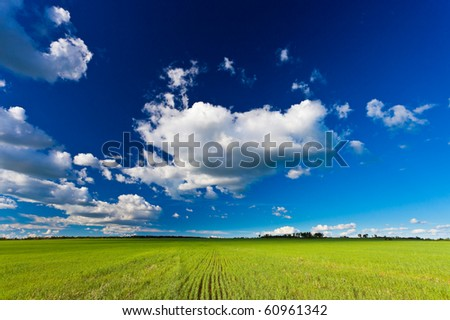 vibrant summer landscape, field under skies - stock photo