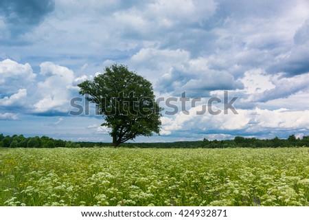 Vibrant Summer Lonely Tree  - stock photo