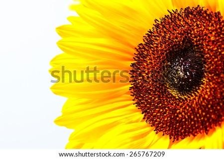Vibrant Sunflower and Stamen Centre - stock photo