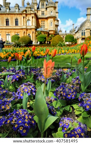 Vibrant tulips amongst purple primula with a manor House in the background - stock photo