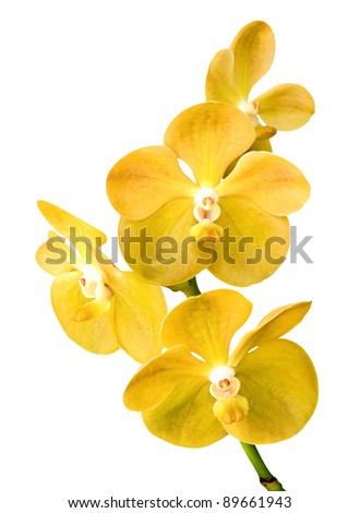 Vibrant yellow tropical orchid flower - stock photo