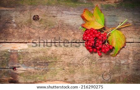 viburnum on vintage wooden boards background autumn concept - stock photo