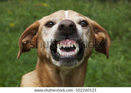 Ohio Visious Dog Breed Law