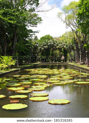 Victoria regia (water lily) in botanical garden, Mauritius - stock photo
