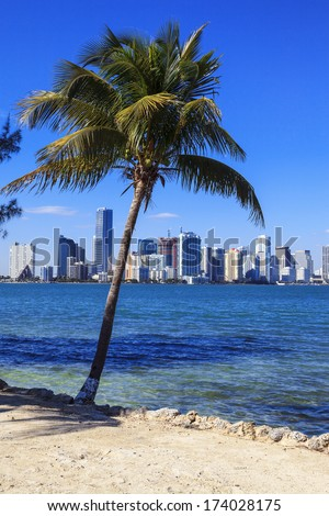 Viedw of Miami skyline and palm tree - stock photo