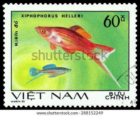 VIETNAM - CIRCA 1980: A stamp printed in Vietnam, shows  fishes Xiphophorus Helleri, Ornamental Fish, circa 1980 - stock photo