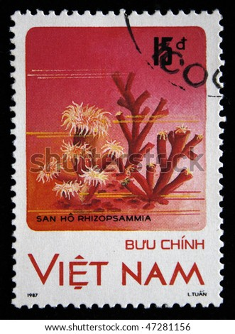 VIETNAM - CIRCA 1987: A stamp printed in Vietnam shows  Rhizopsammia, circa 1987