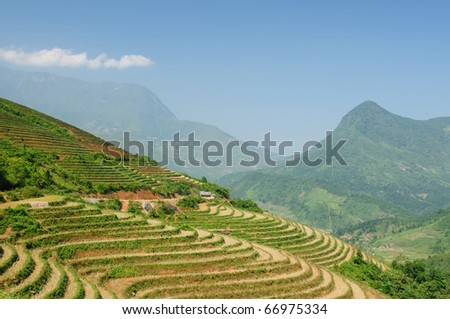 VIetnam - Rice Paddy on the Mountain near Sapa