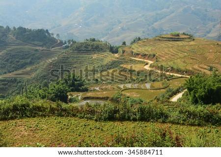 Vietnam, Sapa - Ricefields - stock photo