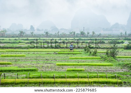 Vietnamese farmer working at rice field. Amazing view of village among limestone rocks at foggy morning. Ninh Binh, Vietnam travel landscapes and destinations - stock photo
