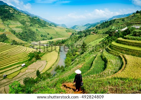 Vietnamese woman in rice terrace,Vietnam