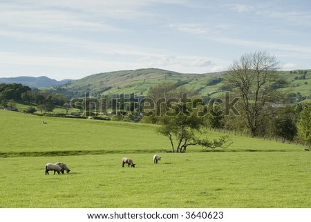 View across farmland in the Lake District - landscape orientation