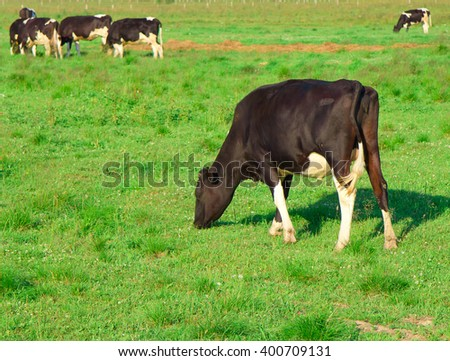 View Animals Grazing