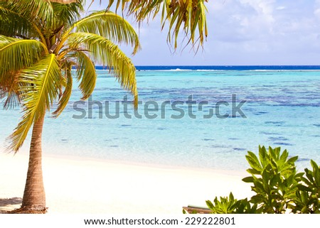 view at perfect empty beach with white sand, turquoise water and beautiful palm tree - stock photo