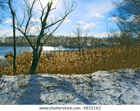 View at the winter river shore against sun. Shot near the Dnieper river, Ukraine.
