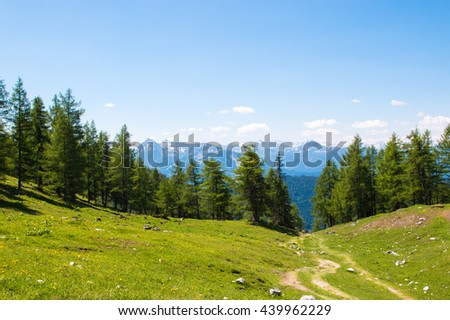 View beauty far, away Alpine rocks, fresh clear blue sky, green forest, spruce, trees. summer. trekking in National park Dachstein, Austria, Europe. Austrian bloom land. poster image - stock photo