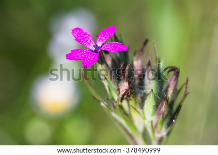 View close up of the wild pink flower with natural background.